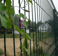 Забор сварная сетка